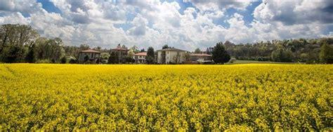 cinema san in fiore a beregazzo una distesa di giallo sono i ci di colza in