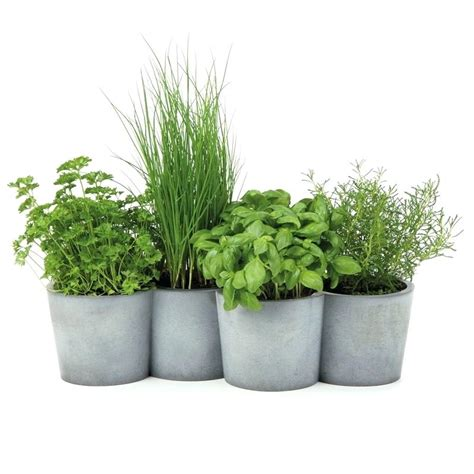 Plantation Herbes Aromatiques Jardiniere by Jardiniere Herbes Aromatiques Vikasaexpo