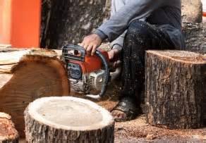 Baum Fällen Preis 2232 by Baum F 228 Llen Lassen 187 So Kalkulieren Sie Die Kosten