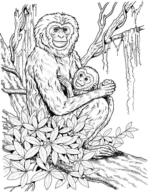 monkey coloring pages for adults realistic monkey coloring pages coloring home