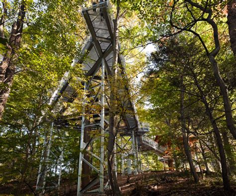 real treehouse tree adventure is a treetop walkway with a giant bird s
