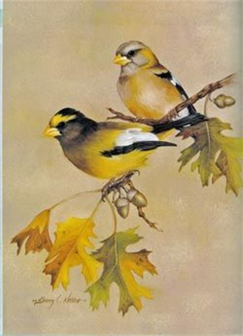 Painting Songbirds With Sherry C Nelson 702 best images about tips on how to paint