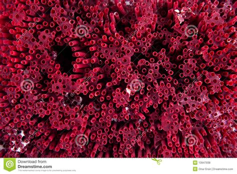 red coral decor stock images image 4448644 red coral background royalty free stock photos image