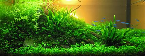 Aquascape How To by Aquascaping Aqua Rebell