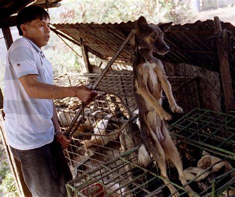 do dogs eat noel i hayvan katliamı ile kutluyor