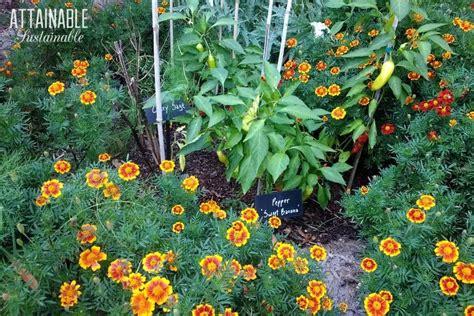 edible landscaping vegetables   front yard garden