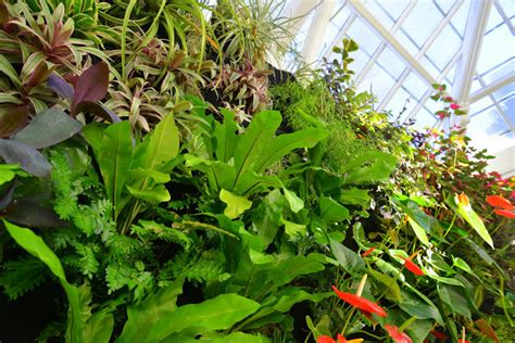 plants on walls vertical garden systems conservatory of