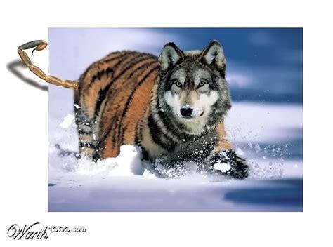 designcrowd wolf wolf tiger worth1000 contests