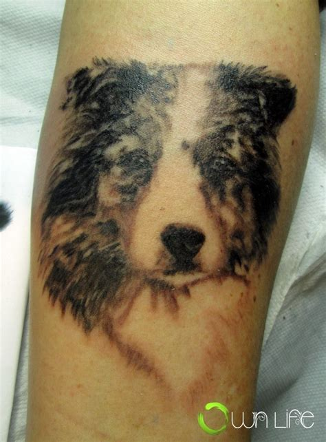 australian shepherd tattoo australian shepherd on lower sleeve