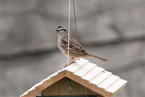 ontario backyard birds photos the weather network
