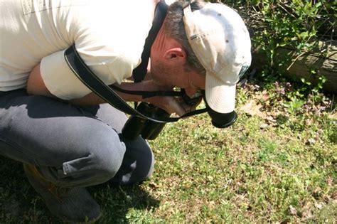 Kent Bioblitz pros volunteers document local wildlife species news