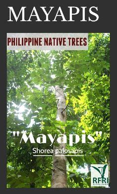 native trees   philippines images trees