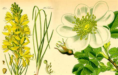 costo dei fiori di bach corso di floriterapia di bach a bologna scuola di