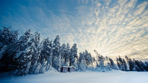 Swedish Style by Husky Tour In The Wilderness Of Lapland 4 Days 3 Nights Nordic Visitor