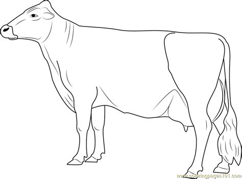 jersey cow coloring page free coloring pages of jersey cow