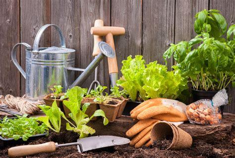 u vegetables florida beginner s guide to growing fruit and vegetables in florida