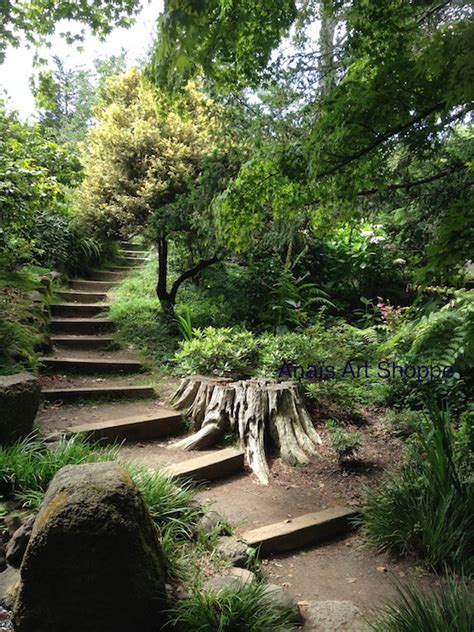 Garden Sf by Going Up The Path Photo Of San Francisco Botanical Garden