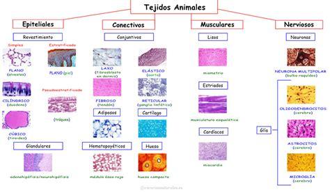 imagenes tejidos animales jos 233 antonio borreguero rolo tejidos animales