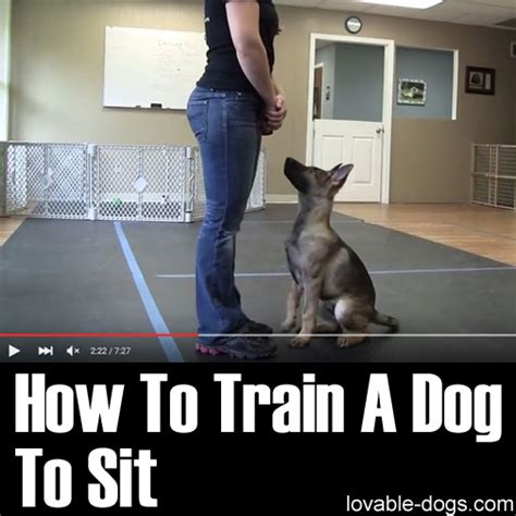 how to house break dog lovable dogs how to train a dog to sit lovable dogs