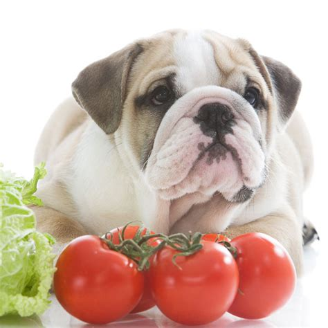 can you eat dogs while foods dogs should not eat tomatoes