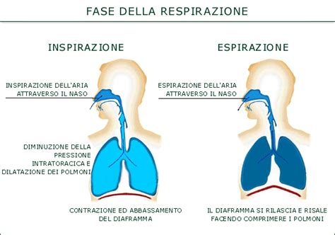 respirazione interna ed esterna riccardo dapretto personal trainer la respirazione per