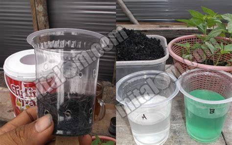 menanam hidroponik tanpa nutrisi 10 langkah mudah menanam cabai rawit hidroponik sistem