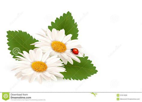 co fiore fiore della margherita di estate della natura con la