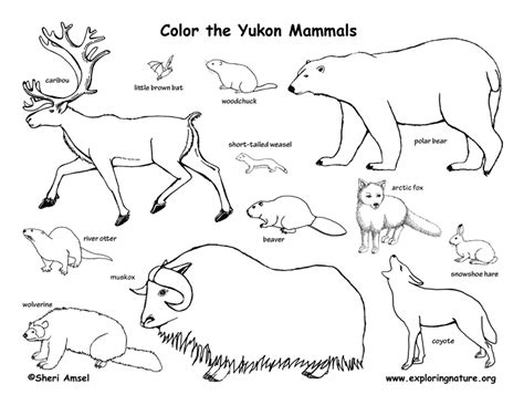coloring pages of canadian animals canadian territory yukon