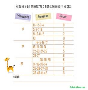Calendario De Embarazo Semanas Y Meses Embarazo Y Parto P 225 3 Hol 237 Stica Mam 225