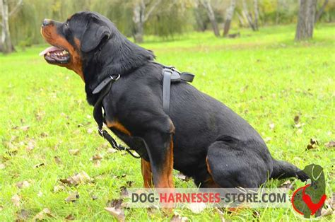 best attack dogs classic leather labrador retriever harness for attack agitation work h8 1092