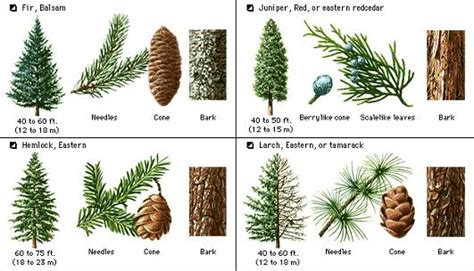types of trees medway valley line types of trees medway valley 28 images what type of
