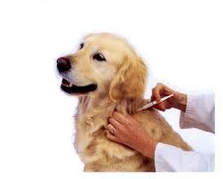how often do puppies get how often does your or cat need a rabies vaccination richmond hill animal hospital