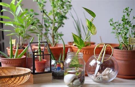 jenis tanaman hias indoor  media air elevenia blog