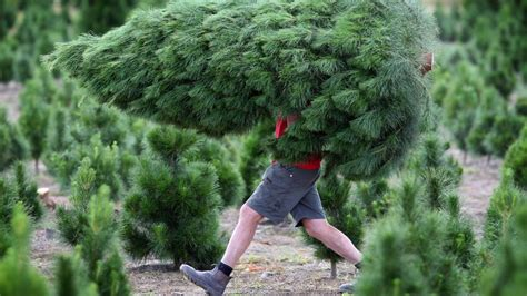 melbourne christmas tree farms open for the season leader