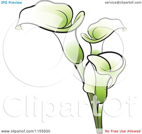 clipart of green calla lily flowers royalty free vector