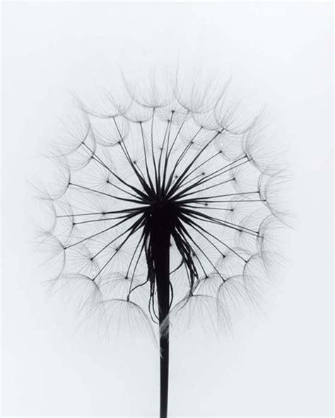 imagenes en blanco y negro de flores 46 best visi 243 n en blanco y negro images on pinterest