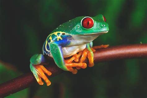 imagenes ironicas de la rana 191 qu 233 comen las ranas