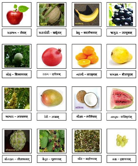 w fruit names the gallery for gt vegetables names telugu to