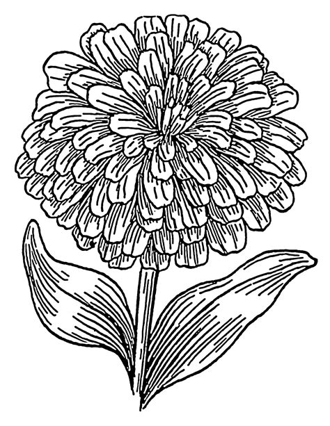 file zinnia psf png wikimedia commons