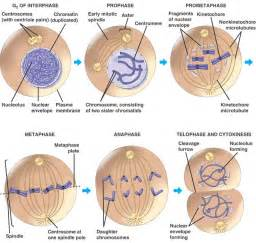 ehumanbiofield chromosomes hw4 mc
