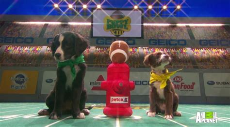 puppy bowl live 2017 live of puppy bowl photo