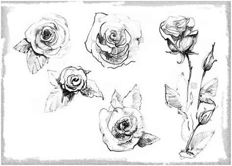 imagenes de rosas dibujadas con lapiz rosas dibujadas con lapiz para alegrar dibujos de amor a