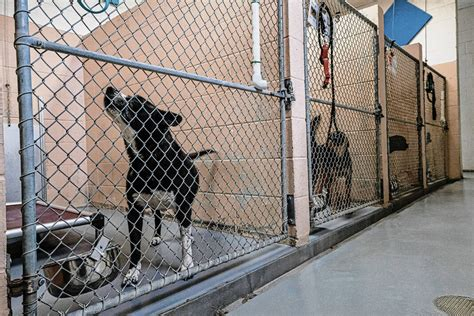 Animal Shelters Kennels