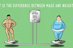 Difference Between Mass and Weight Graph