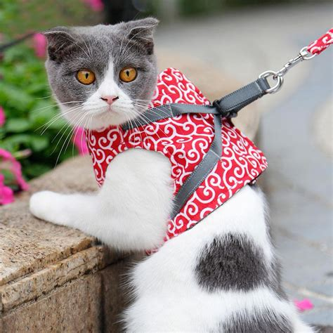 Escape-Proof Cat Harness