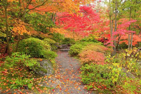 Fall Seattle Arboretum