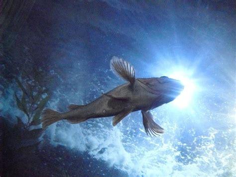 Halo Fish