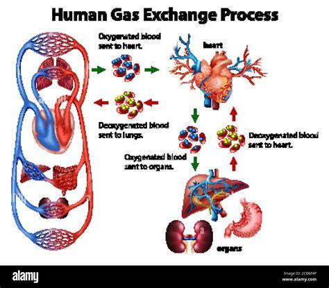 Human Gas
