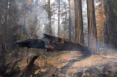 Redwood California Fire