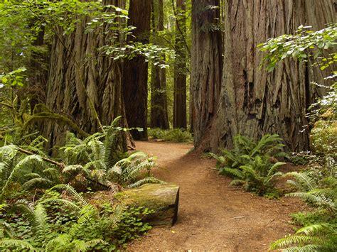 Redwood City Redwoods